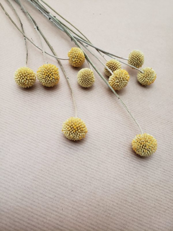 dried yellow flowers-craspedia-billy balls-billy buttons