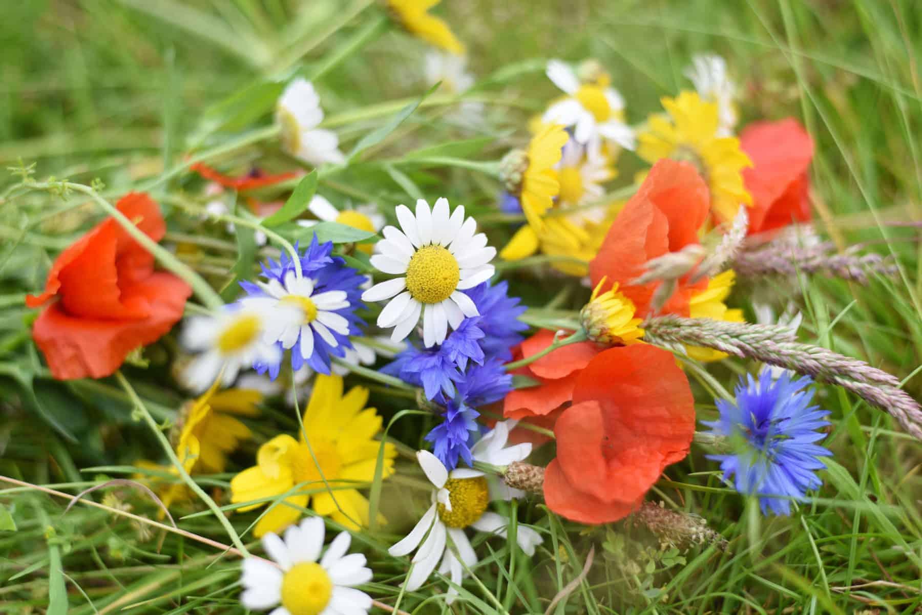 shop online- florist-flowers-torbay