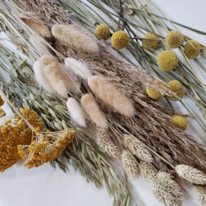 dried flowers by post-nationwide-pampas grass-bunny tails-florist-torbay